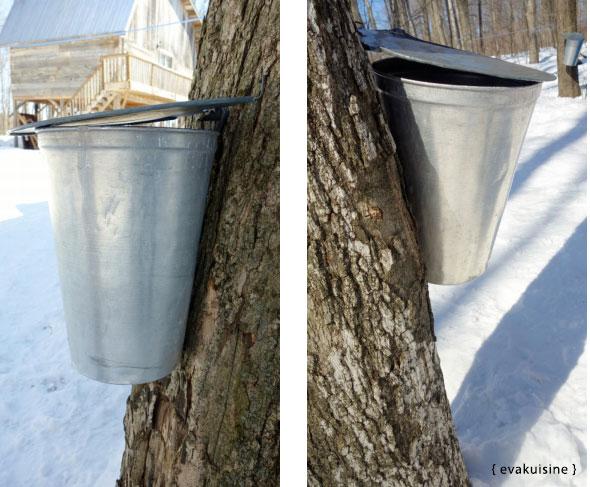 sirop-érable-arbre