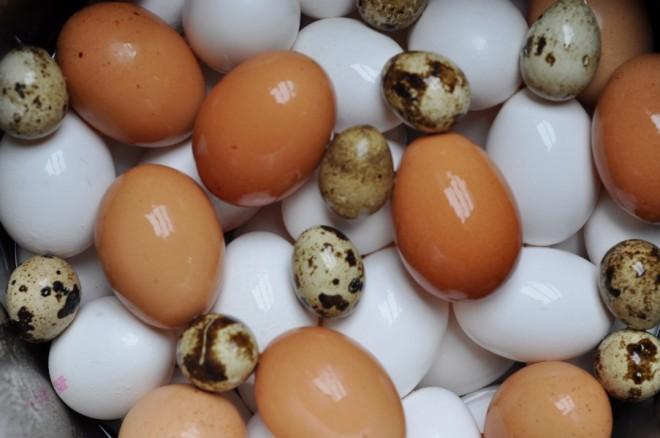 œufs-caille