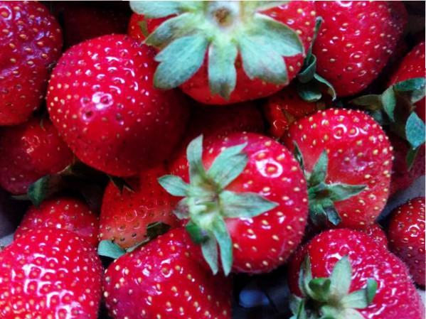fraises-du-québec