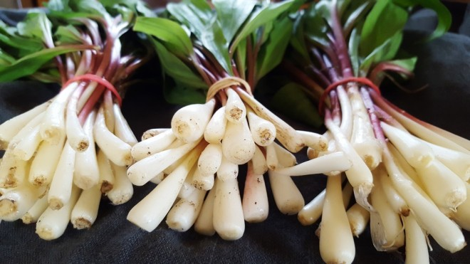 ramps-wild-garlic