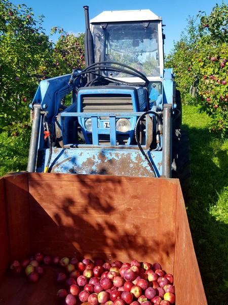 tracteur-pommes