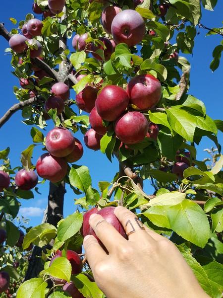 verger-la-pomme-bio
